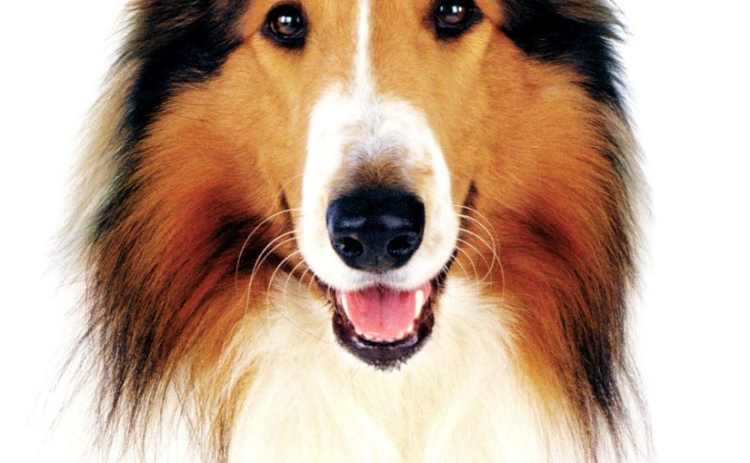 "Poster for the movie ""Lassie"""